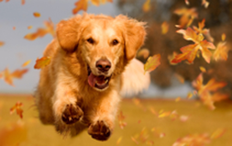 Puppy running in leaves