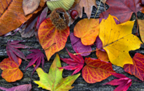 Change is in the Air for Autumn!